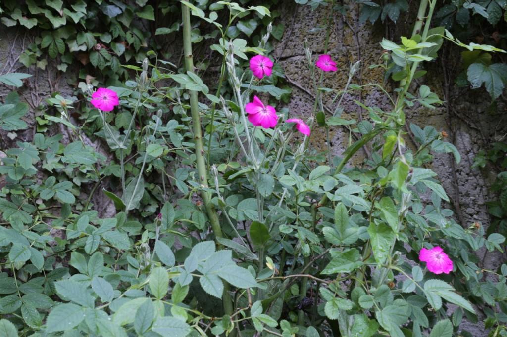 Langzeitaufnahme Blumen